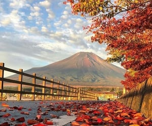 fall and tree image