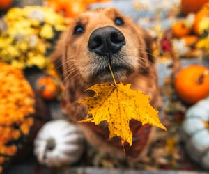 So cute, and Autumn colors are the best beautiful