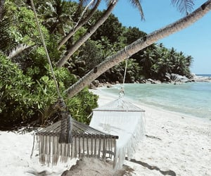beach, palms, and relax image