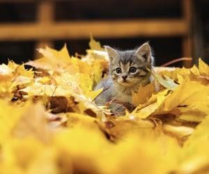 autumn, cute, and kitten image