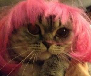 animals, cat, and grunge image