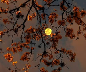 moon, flowers, and tree image
