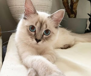 animal, blue eyes, and cute image