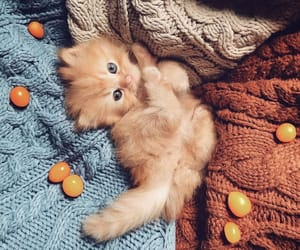 beautiful, kitty, and Sweetie image