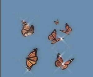 aesthetic, butterflies, and shine image