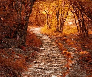 autumn, fallen leaves, and path image