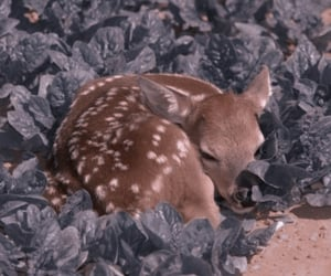 theme, baby deer, and bambi image