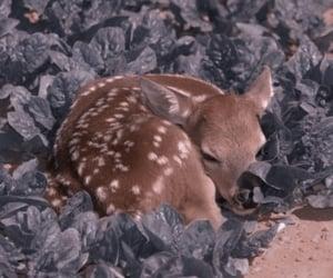 baby deer, edits, and fairytale image