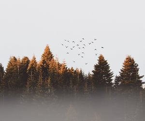 nature, birds, and tree image