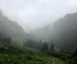 forest, fog, and mountains image