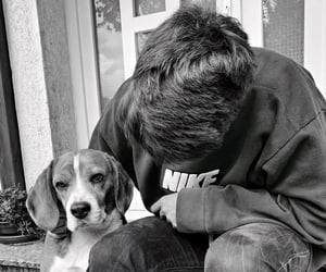 beagle, lovedogs, and purelove image