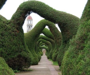 costa rica and topiary image