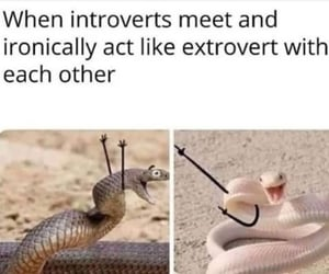 funny, introvert, and extrovert image