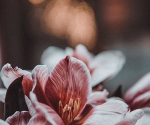 background, flowers, and spring image