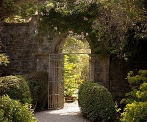 garden, flowers, and gate image