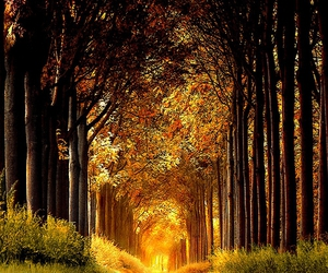 holland, pathway, and vyer image