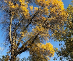 autumn, finland, and sky image