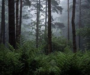 fog, creepy, and dark image