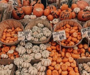 pumpkin, market, and november image