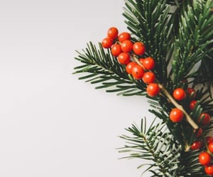 background, christmas tree, and plants image
