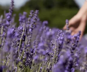 aesthetic, lavender, and life image