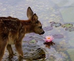 animal, deer, and flowers image