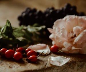 botany, still life, and flower image