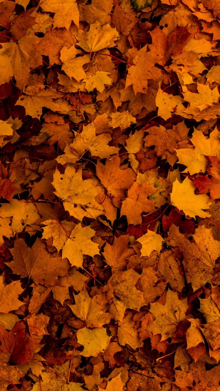autumn, fall, and leaf image