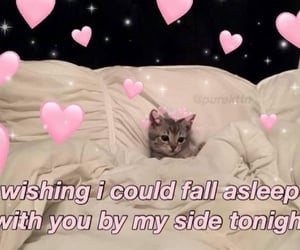 hearts, kitten, and pink image