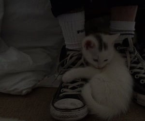 cat, grunge, and aesthetic image