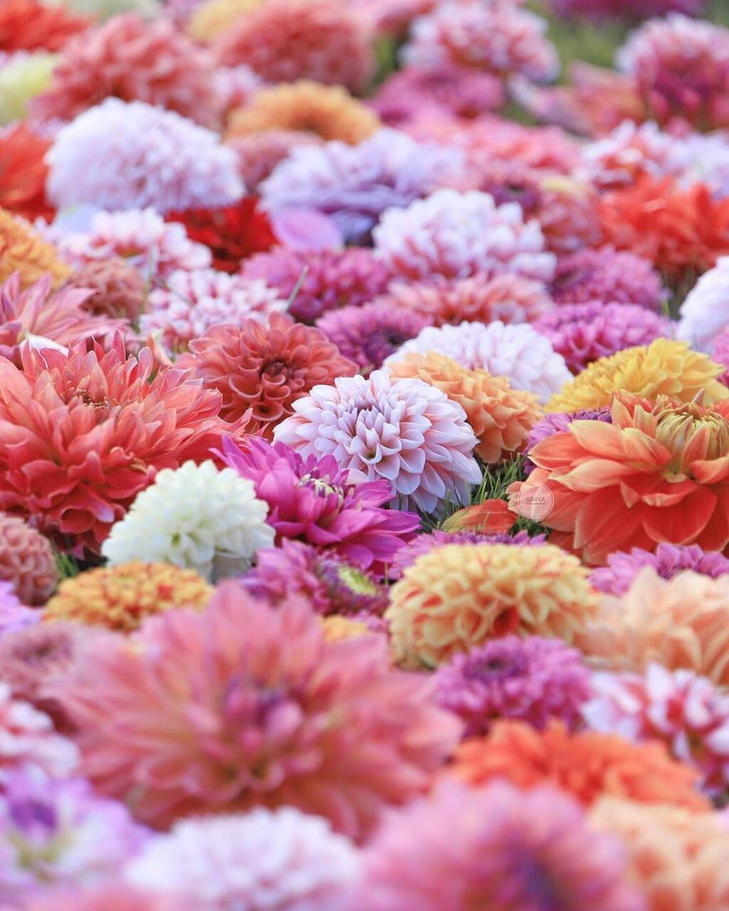 flower, shimya, and instagram image