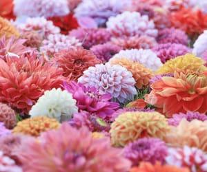 flower, instagram, and shimya image