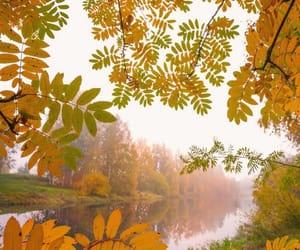 visitfinlandjapan 霧のかかった朝。🍂 こんな秋の風景も素敵ですね。🧡 . @jukkarisikko さんの写真。Kiitos!