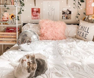 bedroom, cat, and cozy image