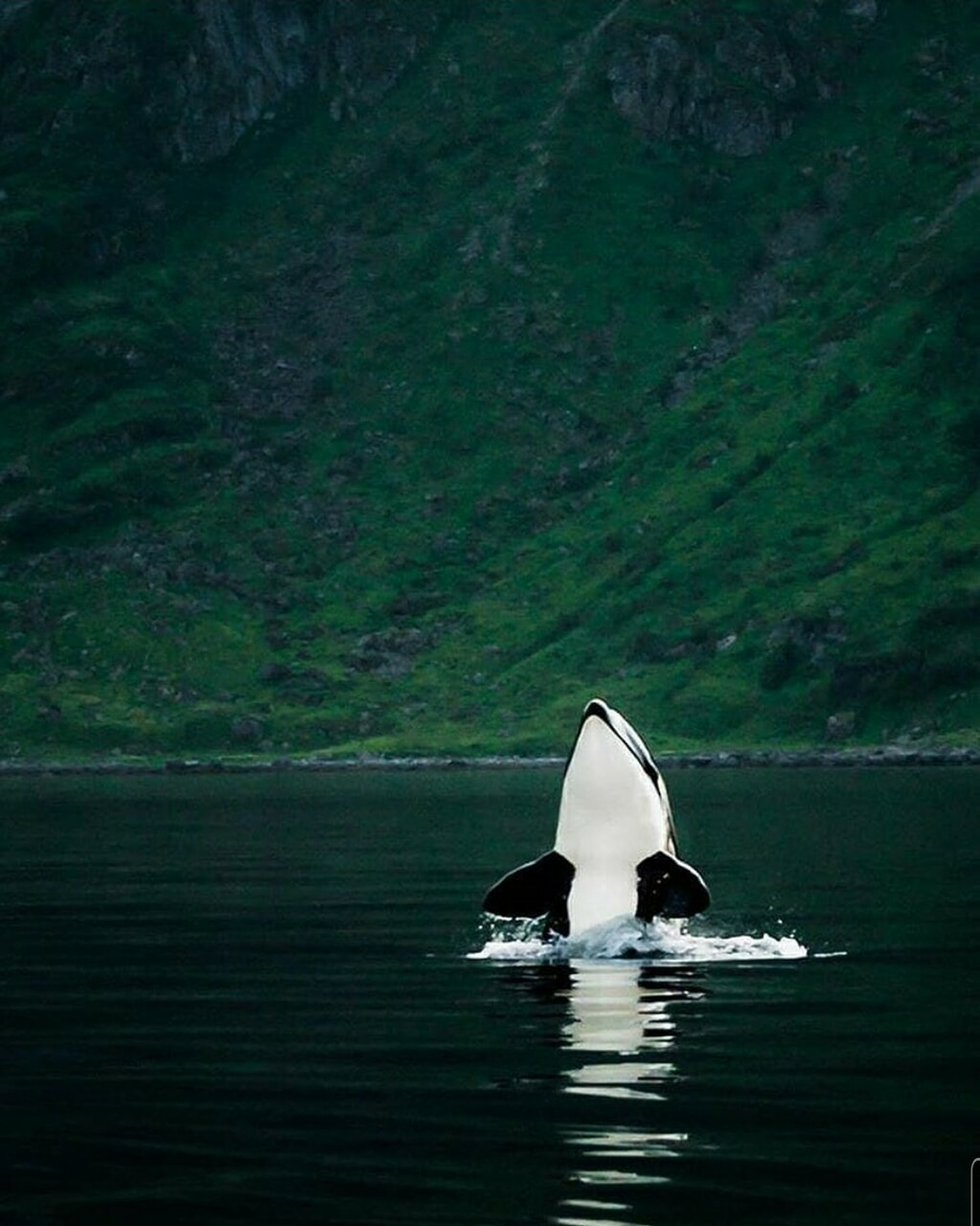 Animales, naturaleza, and orca image