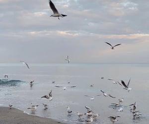 sea and seagulls image