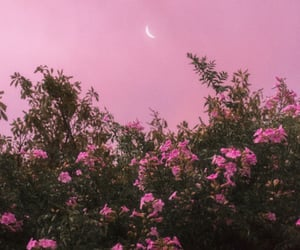 moon, pink, and flowers image
