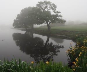fog, flowers, and alternative image
