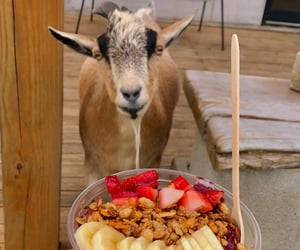 animals, cafe, and goat image