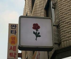 aesthetic, korea, and rose image