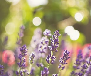 background, beautiful, and lavender image