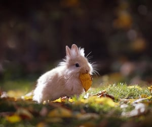 animals, nature, and rabbit image