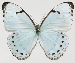 butterfly, soft, and aesthetic image
