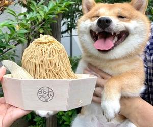 cute dog, dog, and doge image