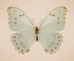 butterfly, theme, and vintage image