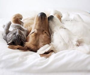 cat and dogs image