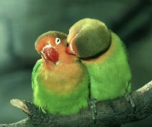 birds, couple, and green image