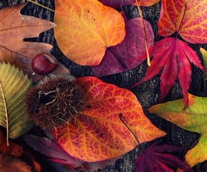 Colorful fall assortment of nature 🍁🌰😍