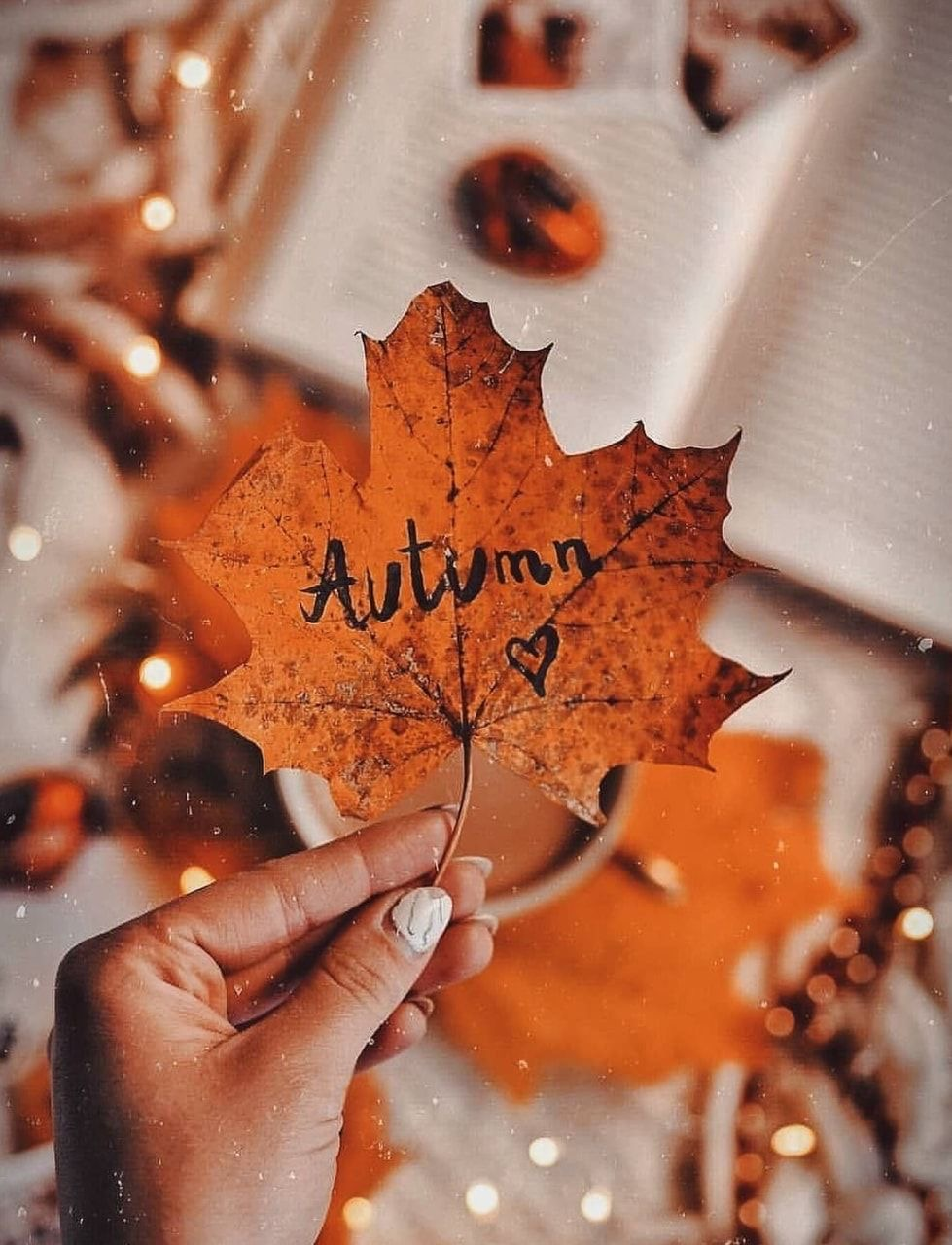 autumn, autumn colors, and cold days image