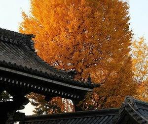 japan, beautiful, and tree image